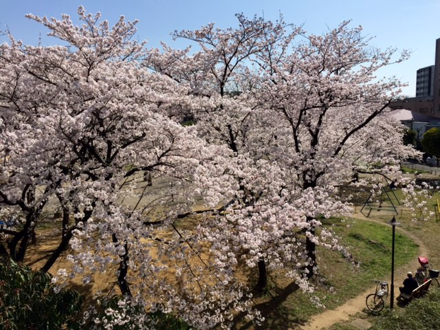 桜とともに・・・